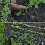 Gemüsegarten – im Juni