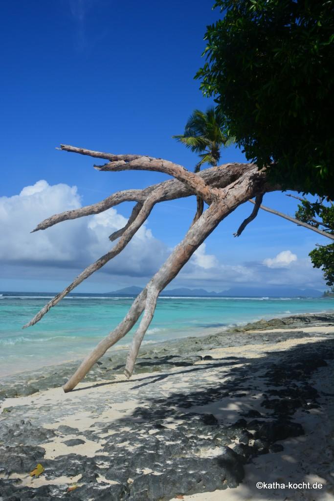 Seychellen_ (428)