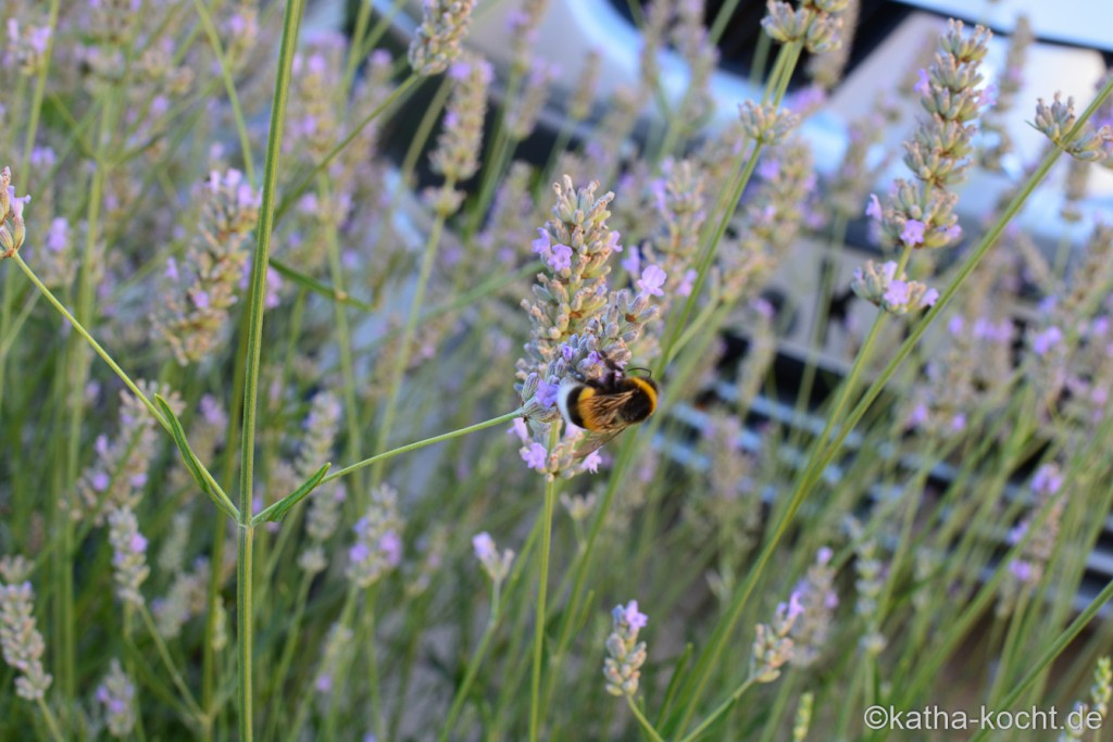 Garteneinblick_Anfang_August_2015_ (32)