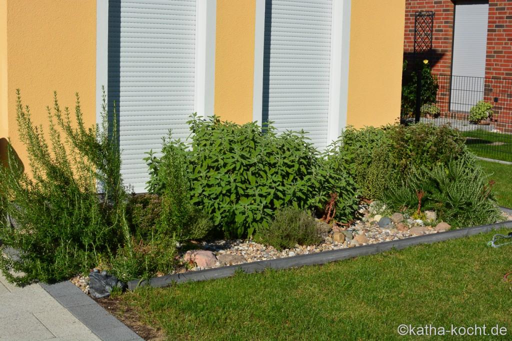 Garteneinblick_Anfang_August_2015_ (37)