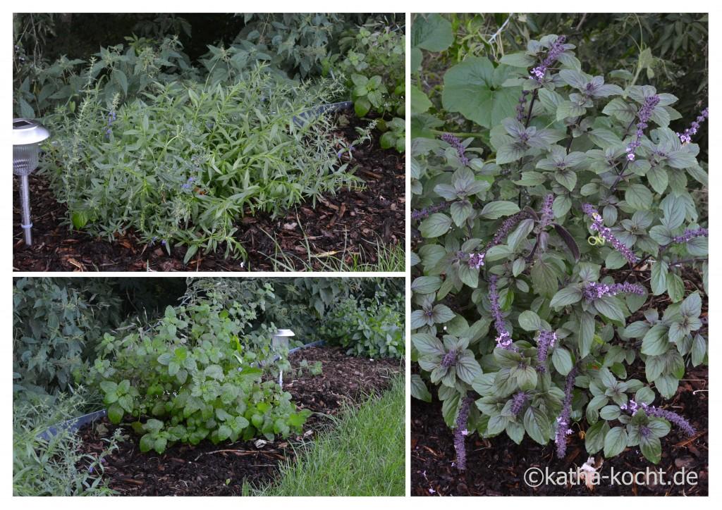 Garteneinblick_August_2015_1