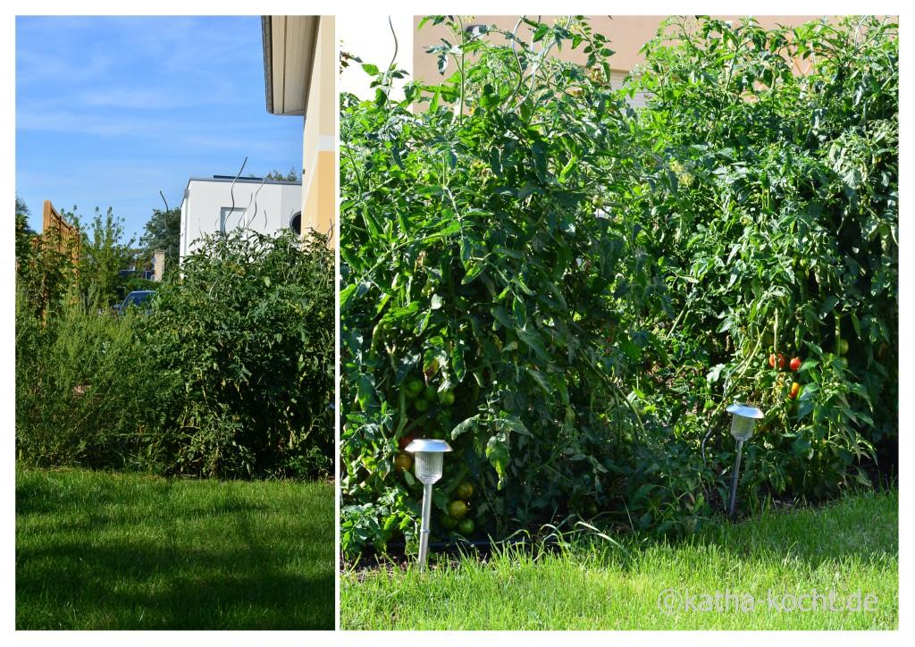 Garteneinblick_August_2015_3