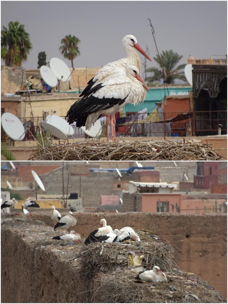 2014-11-14_Marokko8