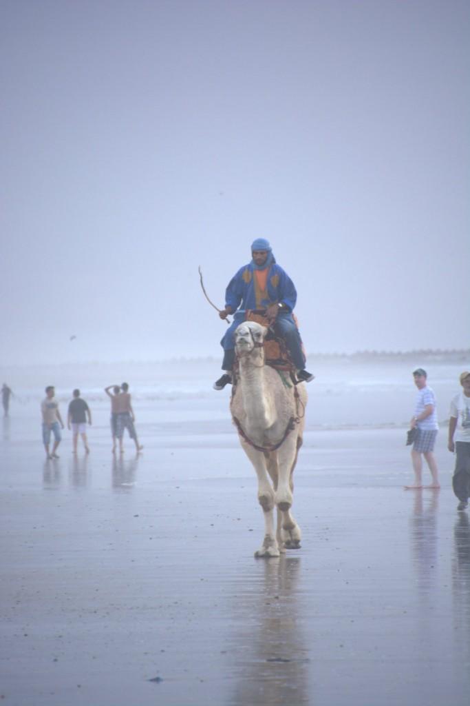 Marokko_2014_ (401)