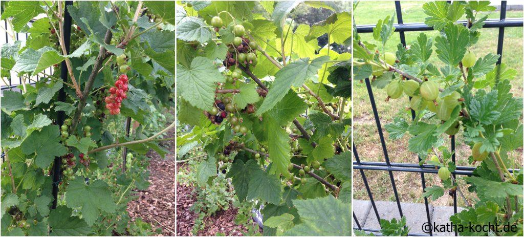 Garteneinblick_Juni_2016_3
