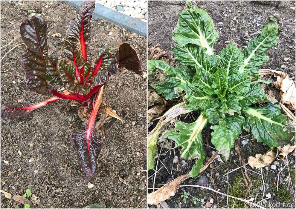 Garteneinblick 2017 - Anfang März