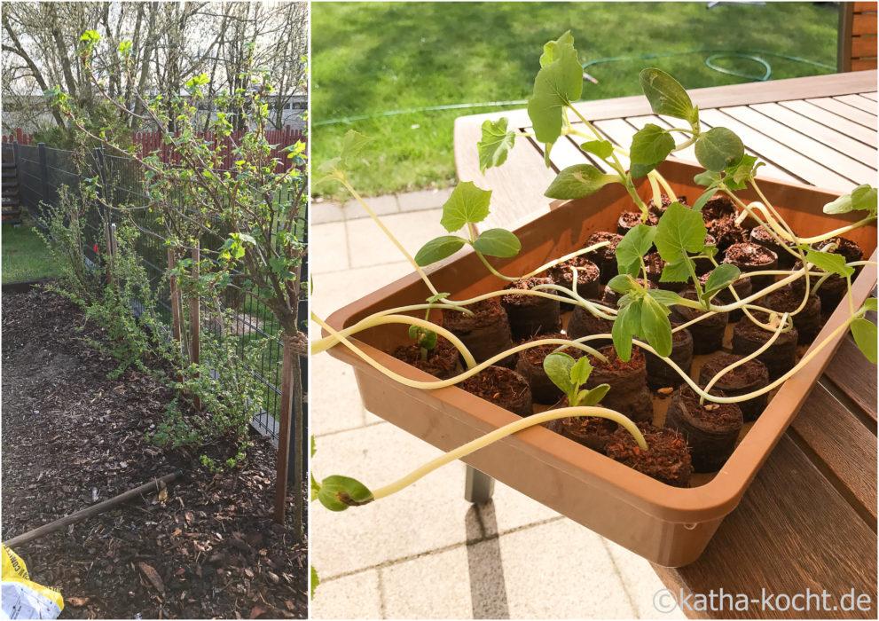 Garteneinblick Anfang April 2017