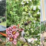 Garteneinblick Juni 2020