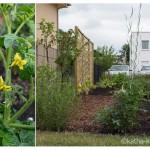 Garteneinblick 2015 – Mitte Juni